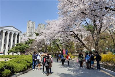 TOP 30 trường Đại học hàng đầu Hàn Quốc